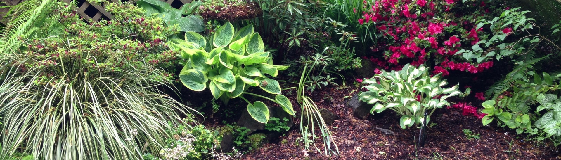 Plant height eases transition from deck to lawn.